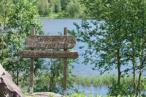 פינת חמד הנושאת את השם :אגם דגי הזהב