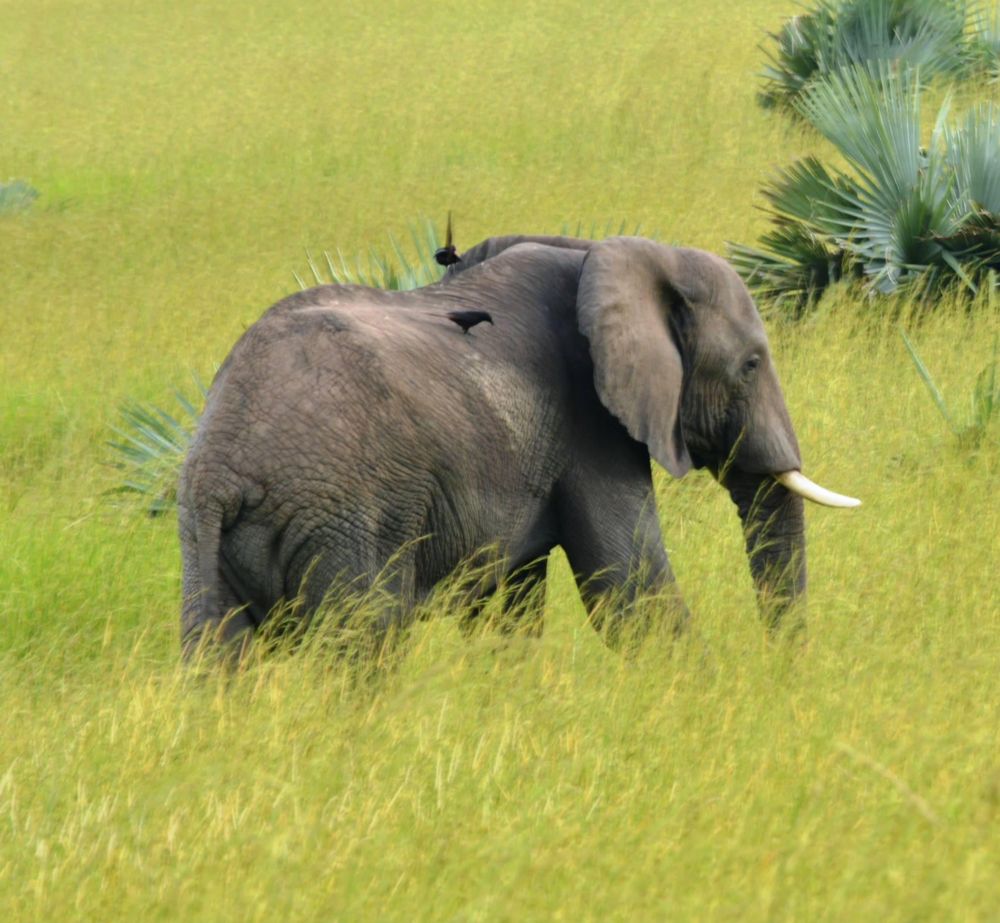 פילים במורצ''סון פארק