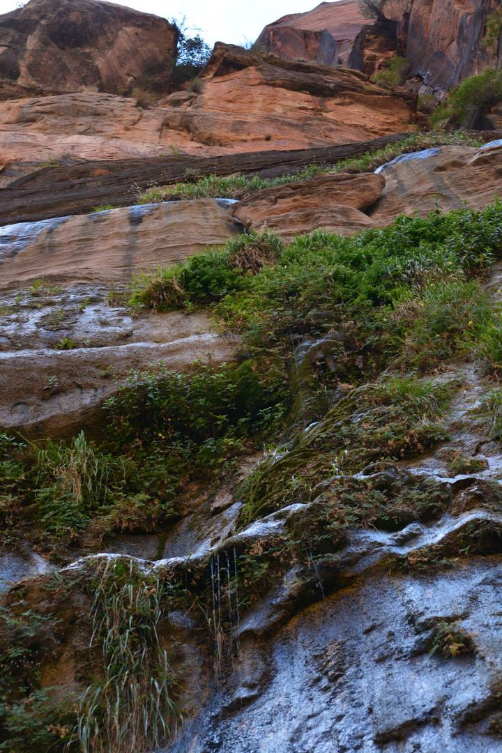 צמחייה יפה ומעיינות הפורצים בין הסדקים אשר בסלעים