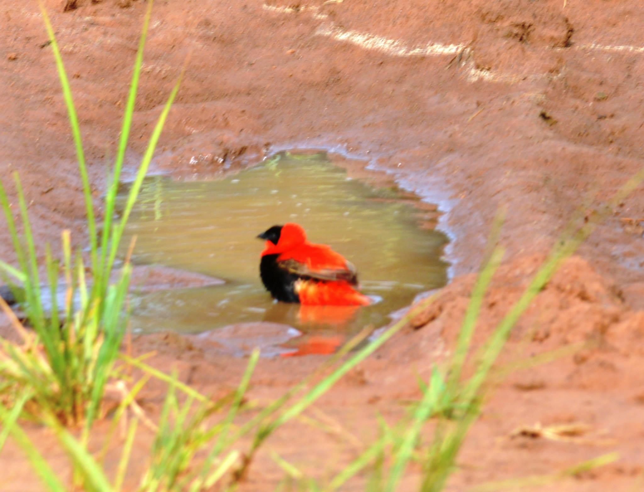 ציפורים בפארק מורצ'יסון