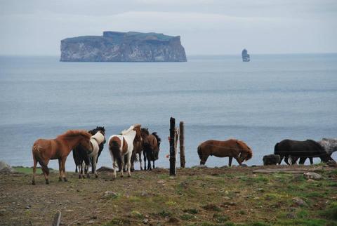 עדר סוסים על רקע האי דרנגי