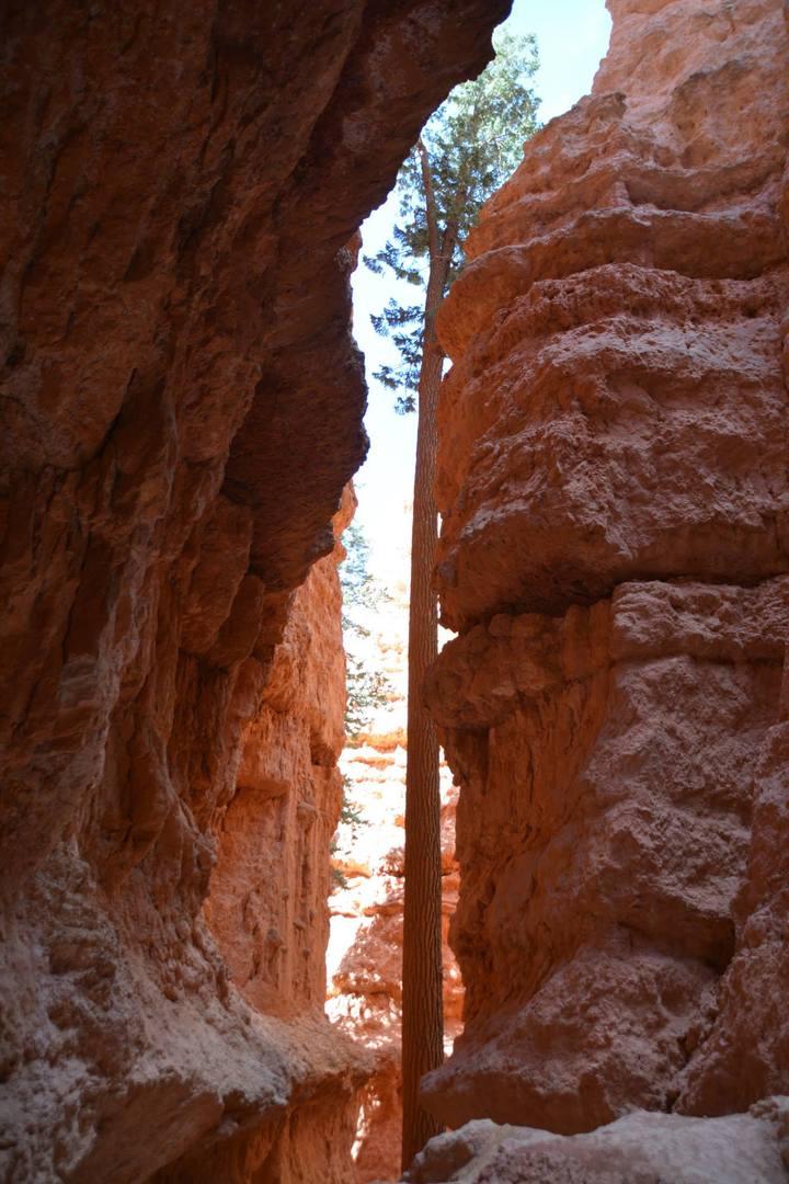 קירות של עמודי אבן גיר נוואחו המתנשאים עשרות מטרים