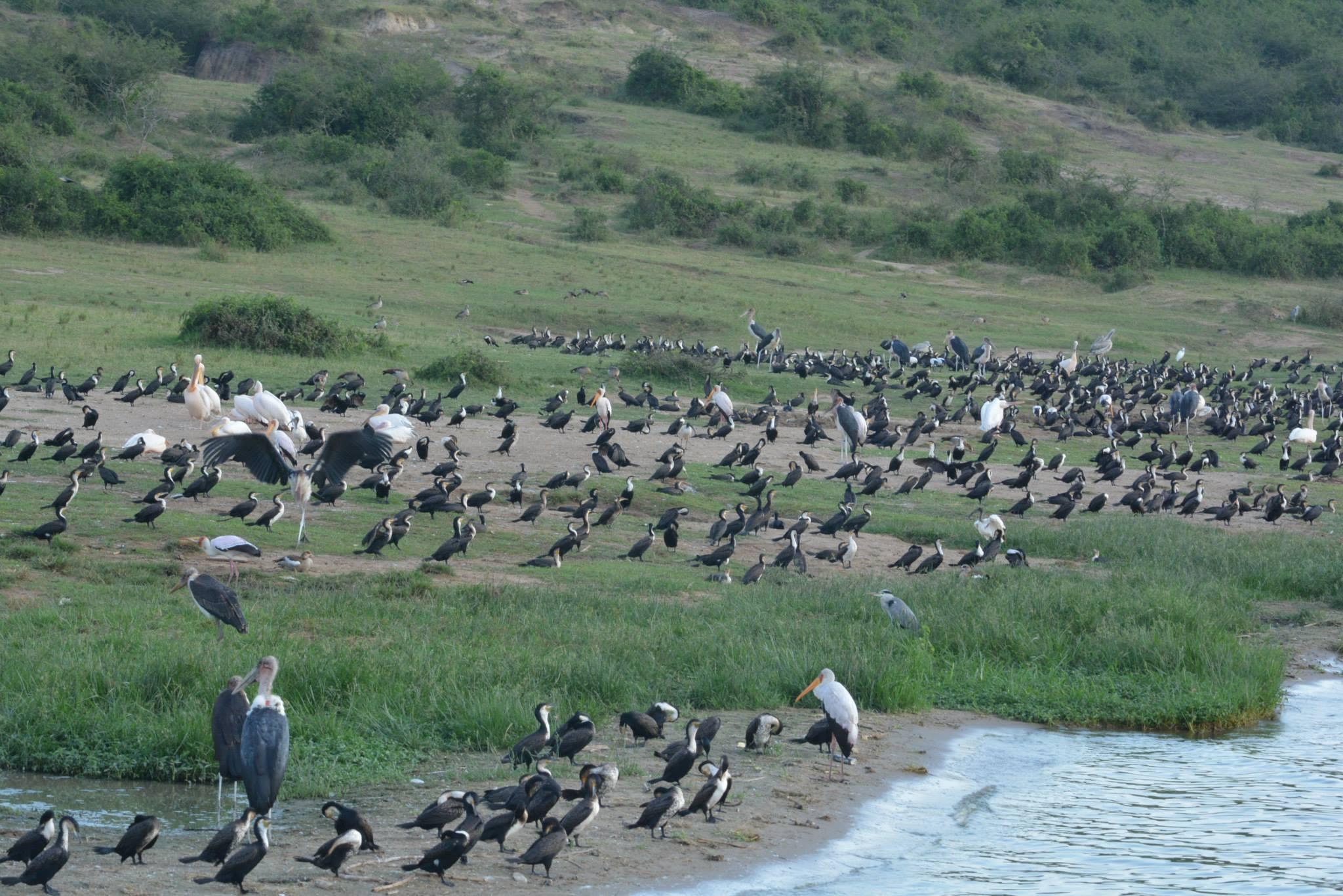 ציפורים על גדת התעלה