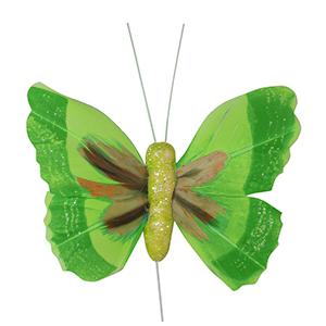 פרפר נוי ירוק
