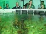 """מו""""פ יאיר: שושנונים - דגי נוי במים מלוחים"""