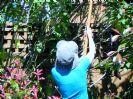 טיפול בגינה בחודשי הקיץ יולי-אוגוסט