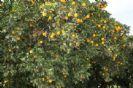 עצי הדר- פרק ב'
