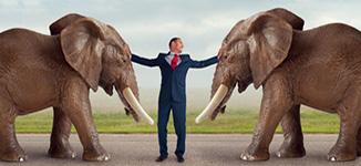 איש מפריד בין שני פילים שרבים כמו המגשר בהליך גישור במצב של סכסוכים במשפחה