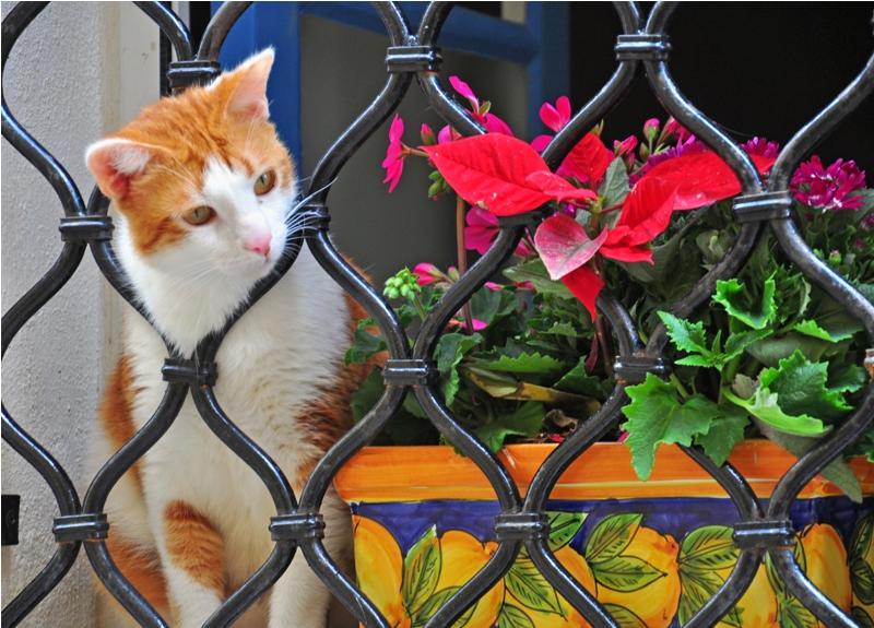 תריס עם חתול