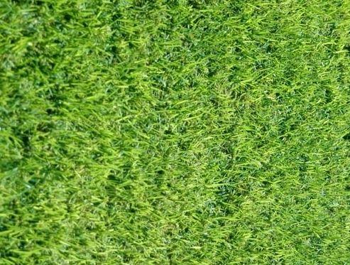דשא מוכן אלטורו