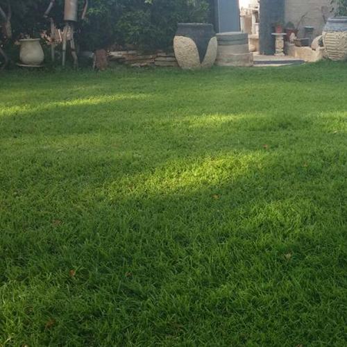 דשא מוכן דרבן גרס