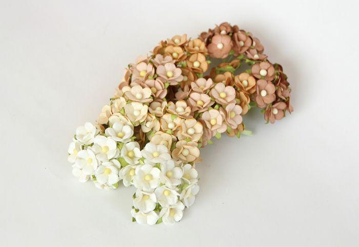 פרחי דובדבן קטן - מיקס חום- 10 פרחים