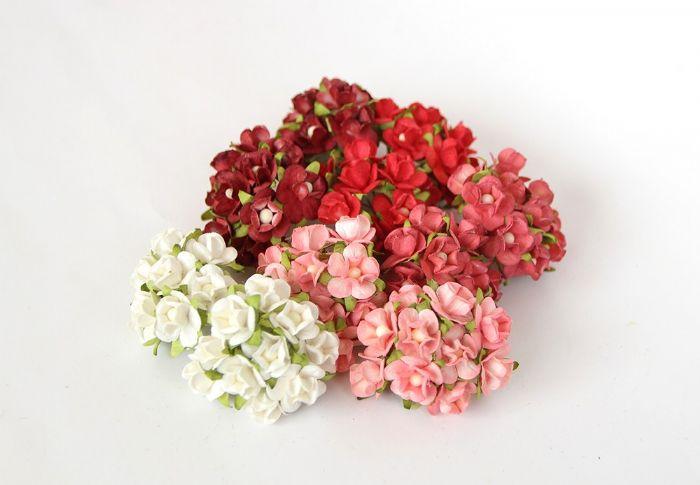 פרחי דובדבן קטן - מיקס אדום- 10 פרחים