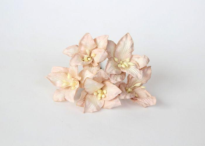 ליליות - בז'- 5 פרחים