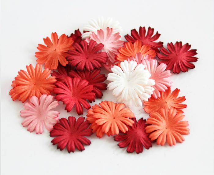 40 פרחי חננית קטנה- מיקס אדום