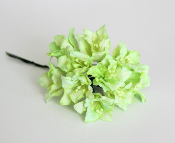 ליליות - יקור בהיר - 5 פרחים