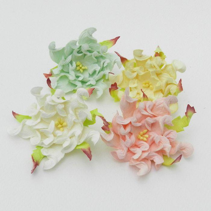 """גרדניה 7ס""""מ - מיקס 4 פרחים"""