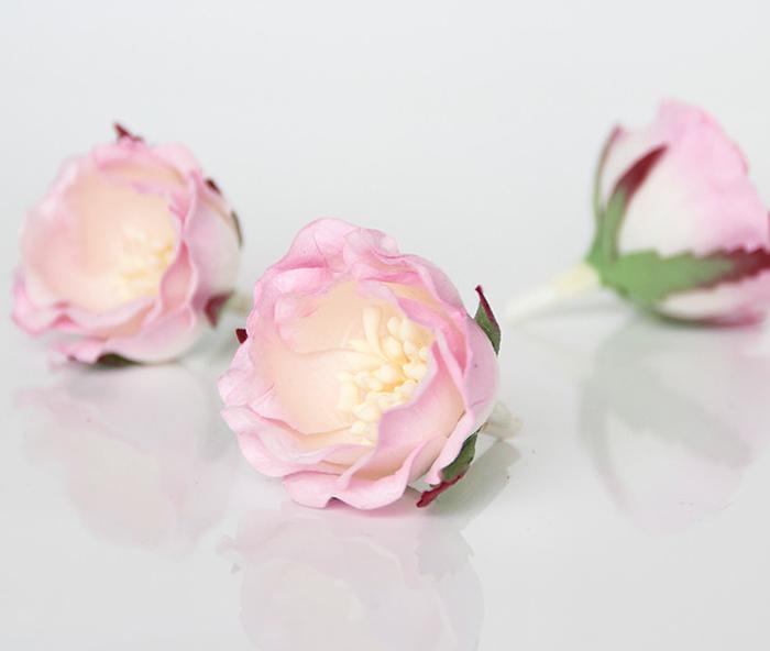 ורד יפני ורוד עם לבן