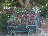 עגלה דקורטיבית ועליה צמחיה פרחונית