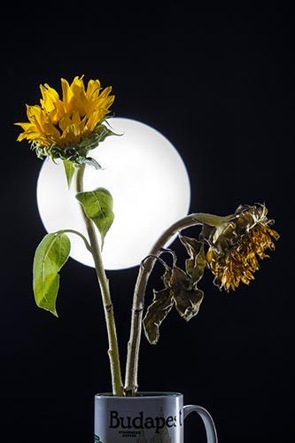 Moti Vagman  - Photographer, digital artis