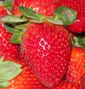 תות שדה כמזון פונקציונלי