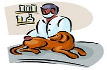 תשלום עבור אגרת רישיון לכלב מעוקר