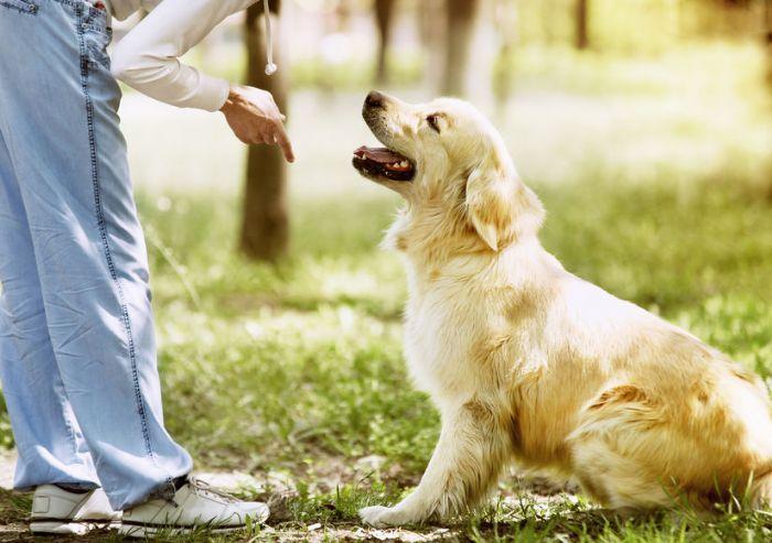 חוג אילוף כלבים -מנוי לשלושה חודשים