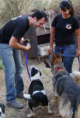 טיפול בעזרת כלבים ליחידים ובמסגרות טיפוליות