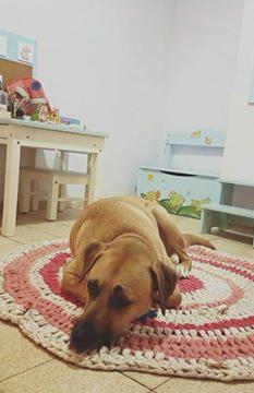 עופרי לייבל - טיפול בעזרת כלבים