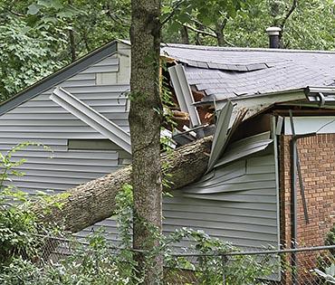 קריסת עץ על מבנה