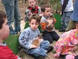 מלטפים ארנבונים ושרקנים