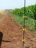 גדר חשמלית להגנה לשטח תירס