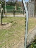 גדר חשמלית לחי פארק מוצקין