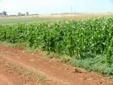 גדר הגנה לשטח חקלאי