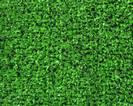 דשא סינטטי קצר