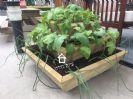 אדנית תלת-שלבית מעץ לגידול ירקות