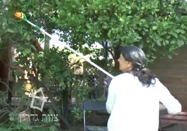 כלי גינון ידניים קוטפת פירות - צוות גדרון