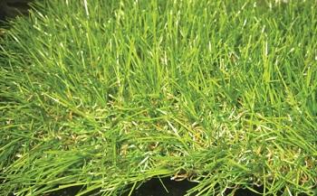 דשא סינתטי 40 ממ 6 צבעים - צוות גדרון