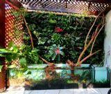מונו בונה אקווריום לפרויקט צמחיה של אלי קידר