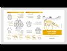 מדריך עקבות יונקים- צפון
