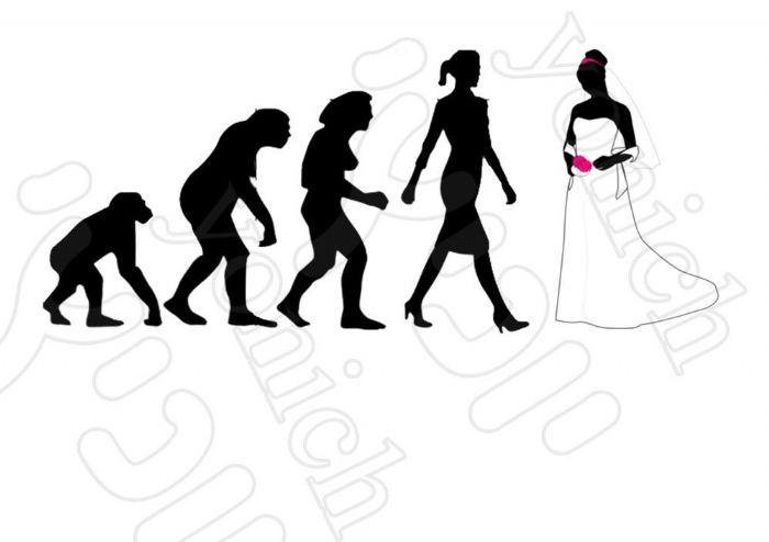 Evolution 284