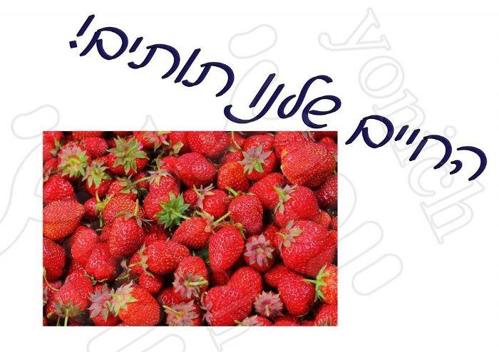 החיים שלנו תותים 335