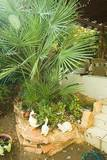 מסלעה היוצרת פינה טרופית בולטת בגינה