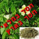 קיים במלאי -דמיאנה (גם תחליף טבק) | עלים | 100 גרם | Turnera diffusa | Damiana