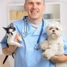 וטרינר לכלבים, חתולים וחיות אחרות