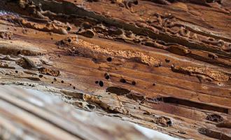 טיפול במזיקי עץ
