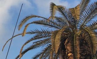 טיפול בעצים חולים