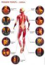 מה מסתתר מאחורי כאבי הגב, הצוואר או הכתפיים?