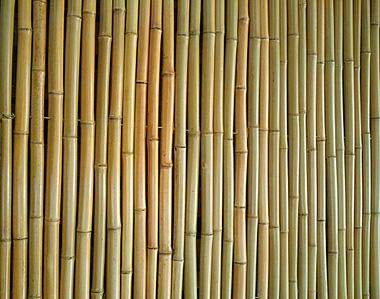 """גדר במבוק מושחל 30-35 מ""""מ צבוע"""