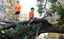 נשבר לו - עץ הפיטולקה
